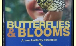 Butterflies & Blooms by Chicago Botanic Garden