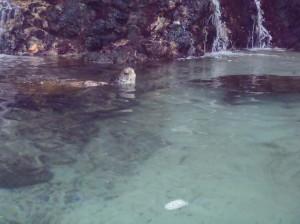 Sea Turtle Coral World