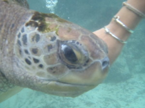 Coral World Turtle