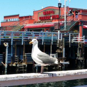 Rappas Seafood Restaurant