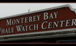 Monterey Bay Whale Watching Tour: Blue Whale Video