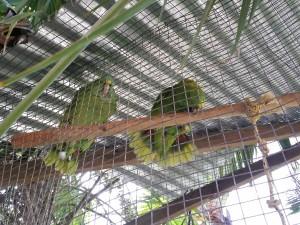 Casa Coral Parrots