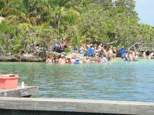 Anthony's Key Resort dolphin encounter