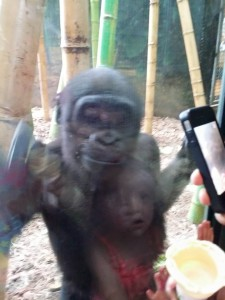 Baby Gorilla and Bella