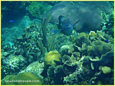 Roatan Honduras Snorkeling