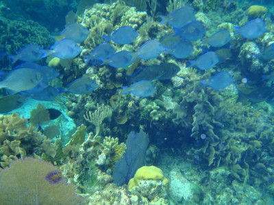 Roatan Honduras Reef