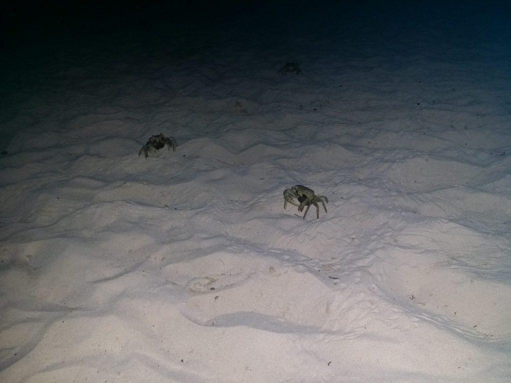 Beach Crabs at Night