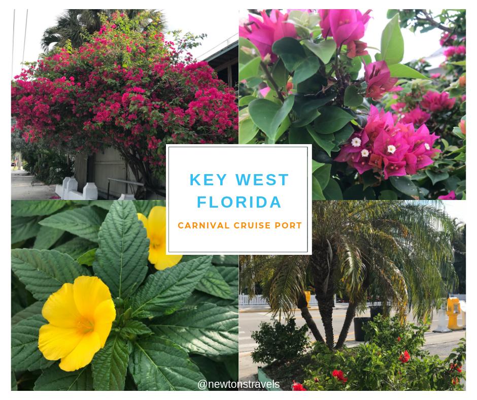 Flowers in Key West, FL